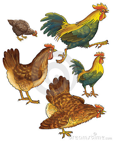 Hens and
