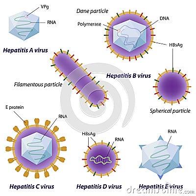 Free Hepatitis Viruses Comparison Royalty Free Stock Image - 23979936