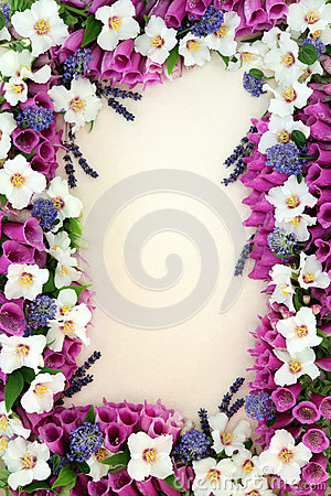 Free Herb And Flower Border Stock Image - 46180811