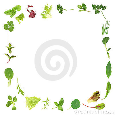 Free Herb And Lettuce Leaf Border Royalty Free Stock Image - 6589096