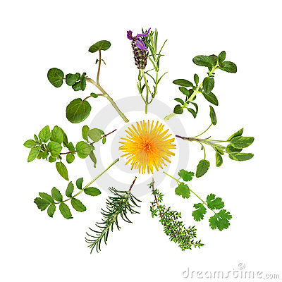 Free Herb And Wild Flower Abstract Stock Photos - 11869693