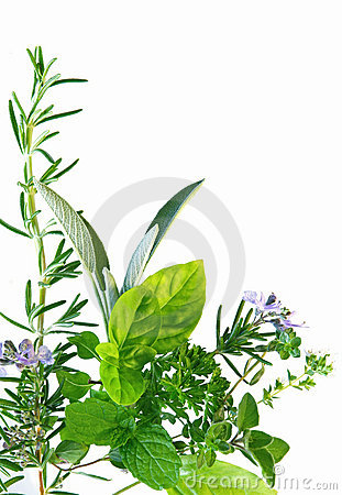 Free Herb Border Royalty Free Stock Images - 4271519