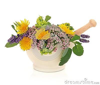 Herb Flower Beauty