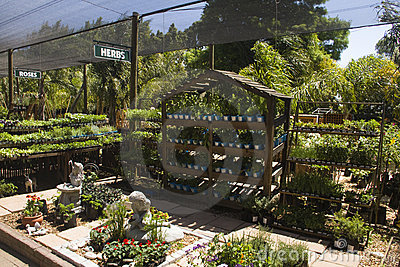 Herb and flower nursery