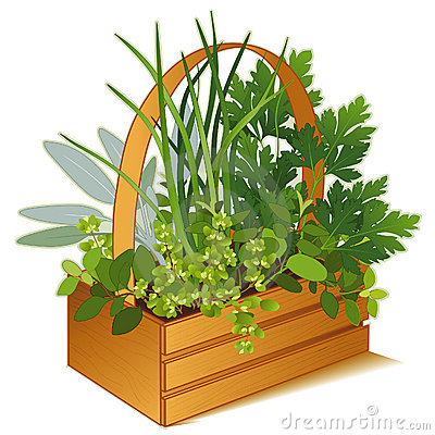 Free Herb Garden In Wooden Basket Royalty Free Stock Photos - 10020508