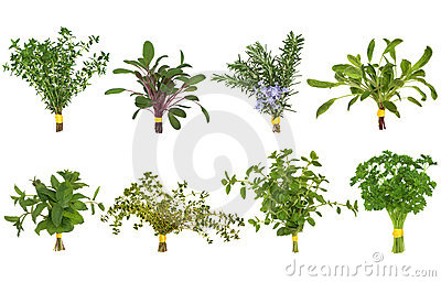 Herb Leaf Posy Selection