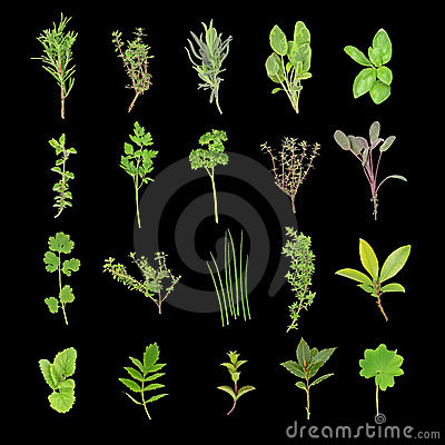 Free Herb Leaf Selection Stock Images - 6208424