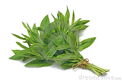 Herb Series Spearmint