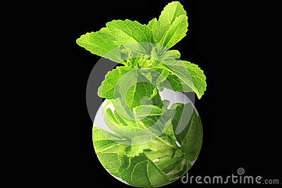 Herb stevia with go green logo