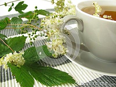 Herb tea with meadowsweet