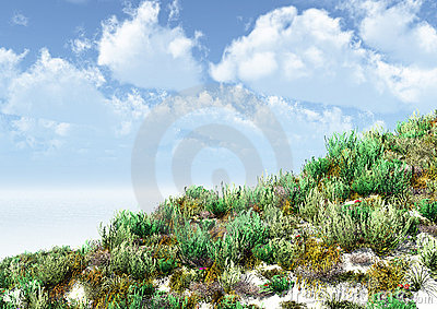 Herbaceous vegetation on a sandy surface