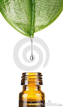 Free Herbal Medicine Stock Photo - 30606340
