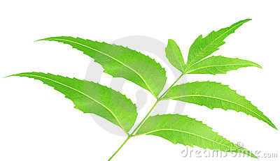 Herbal Neem leaves