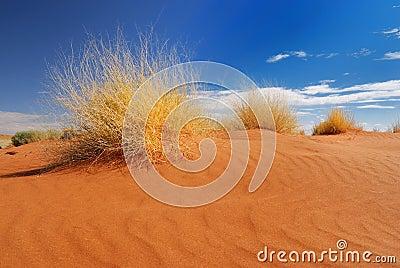 Herbe jaune dans le désert