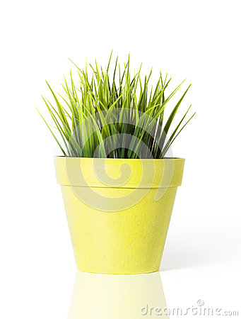 herbe verte dans un pot de fleur jaune d 39 isolement sur le fond blanc photo stock image 31320820. Black Bedroom Furniture Sets. Home Design Ideas
