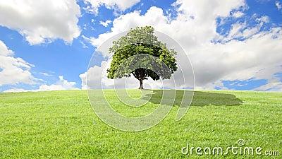 Herbe verte et arbre, fond de nuages.
