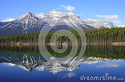 Herbert Lake.