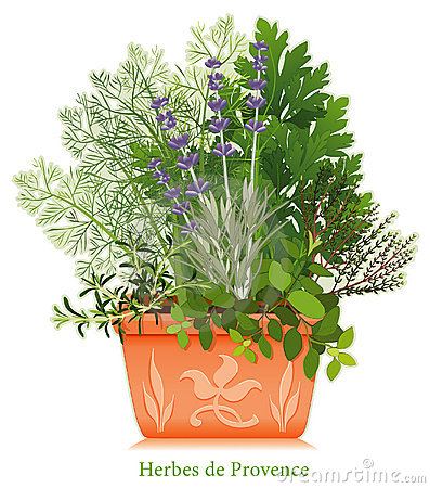 Herbes de Provence in Clay Planter