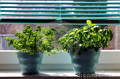 Herbes fraîches (basilic et persil)