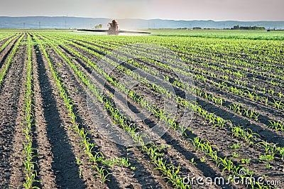Herbicides spraying