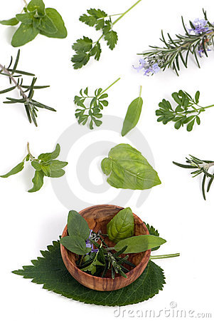 Herbs 004