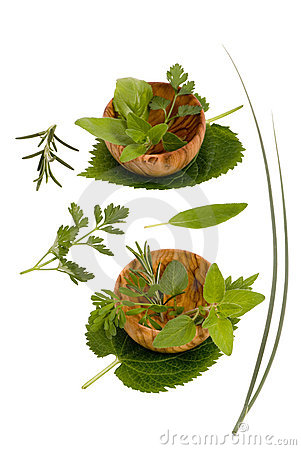 Herbs 006
