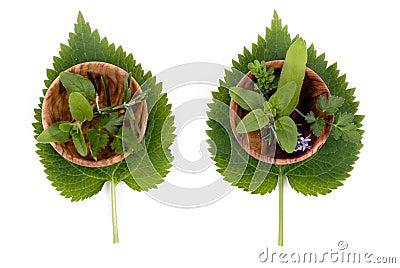 Herbs 008
