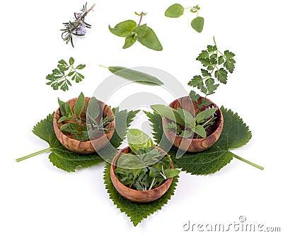 Herbs 009