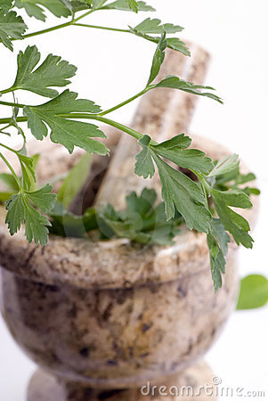 Herbs 010