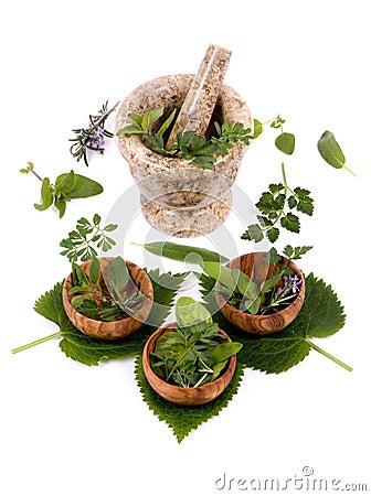 Herbs 011
