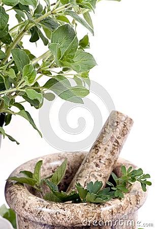 Herbs 014