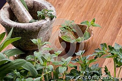 Herbs 018