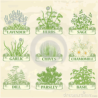 Free Herbs Royalty Free Stock Photos - 34306038