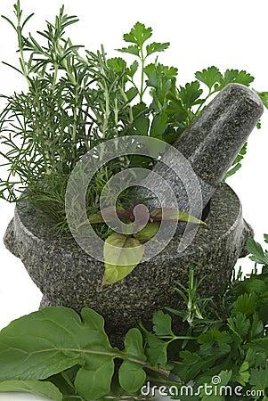 Free Herbs Stock Photo - 5984970