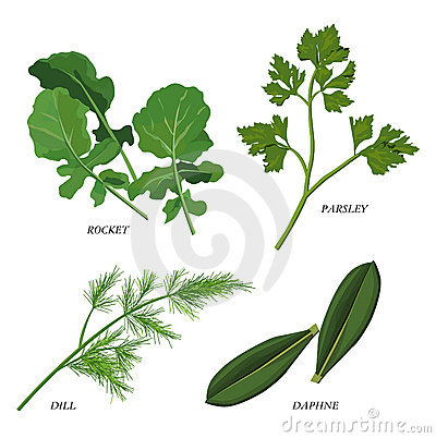 Free Herbs Royalty Free Stock Images - 9060109