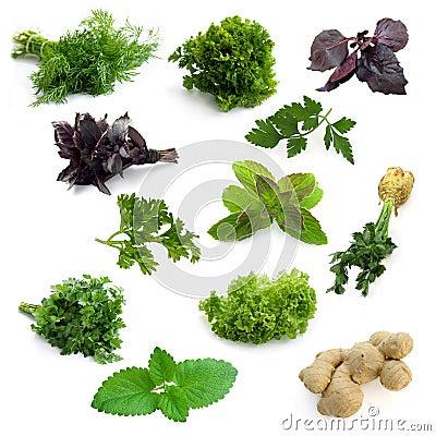 Free Herbs Royalty Free Stock Image - 9264106