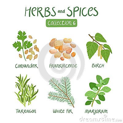Free Herbs And Spices Collection 6 Royalty Free Stock Photo - 59917275