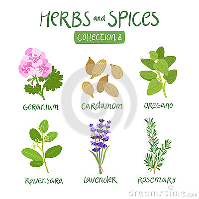 Free Herbs And Spices Collection 8 Royalty Free Stock Image - 59917236