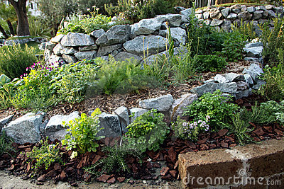 Herbs and aromatic plants spiral garden bed