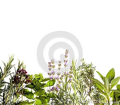 Herbs border on white