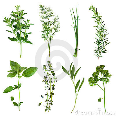 Free Herbs Collection Stock Images - 22239474