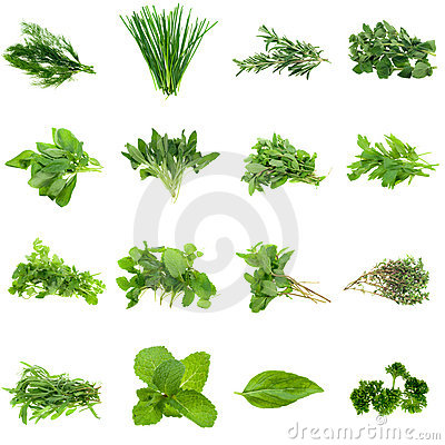 Free Herbs Collection Stock Images - 6260204