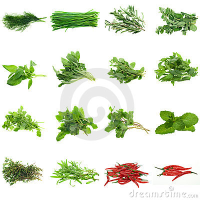 Free Herbs Collection Stock Images - 6433254