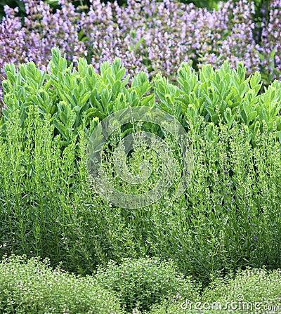 Herbs garden bed