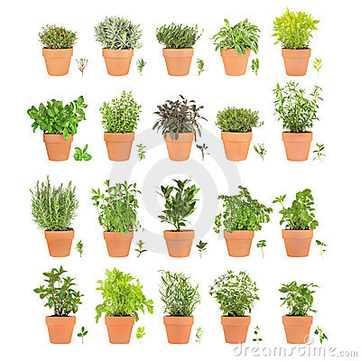 Free Herbs In Pots With Leaf Sprigs Royalty Free Stock Image - 7862816
