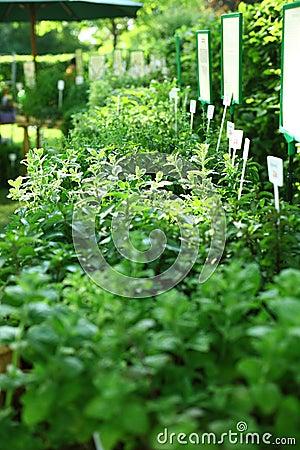 Herbs on the market