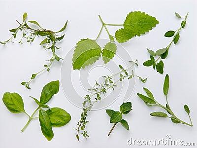 Herbs plateau