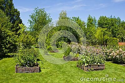 Herbs in Provins rose garden