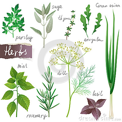 Free Herbs Set Royalty Free Stock Photography - 28939857