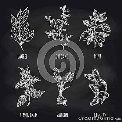 Herbs and spice on blackboard Vector Illustration